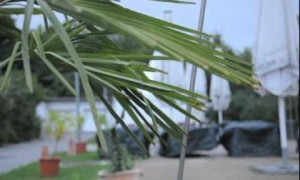 Bouq Garden 2010